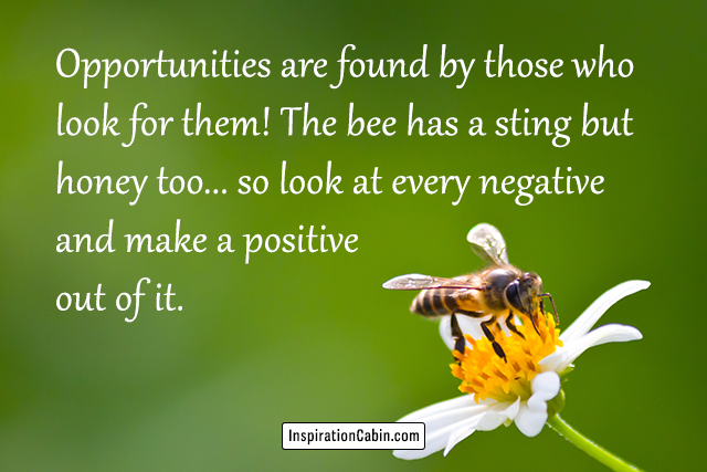 Opportunities are found by those who look for them! The bee has a sting but honey too... so look at every negative and make a positive out of it.